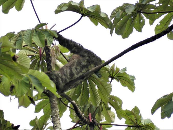 Monteverde (1)