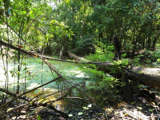 2. Tag Iquitos Amazonas (28)