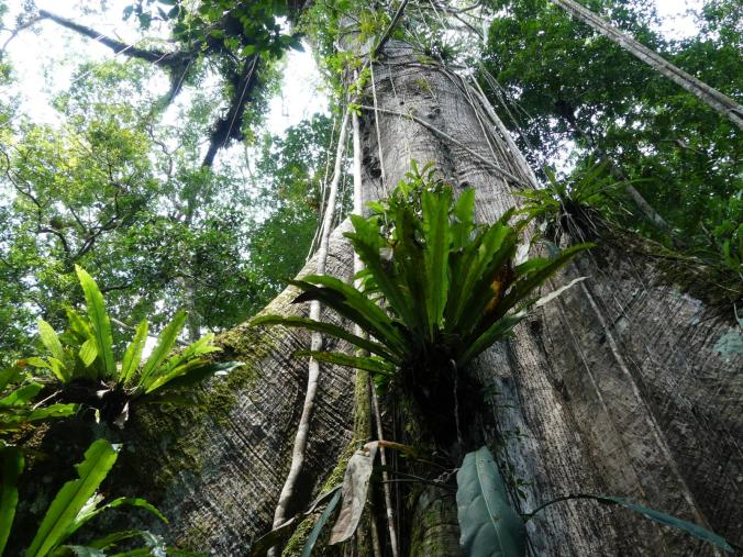 2. Tag Iquitos Amazonas (38)