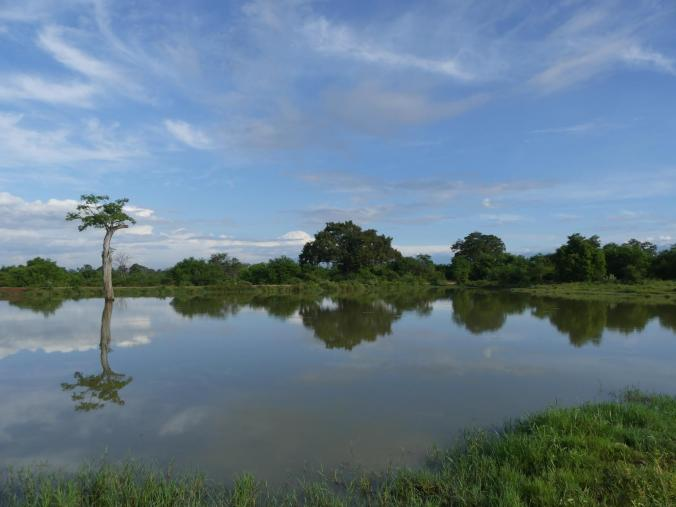 Udawalawe Nationalpark (89)